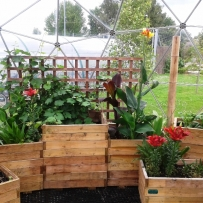 Planting boxes with exotic plants and grape vines