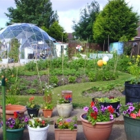 Community gardening projects