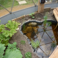 Pond life and wet gardens