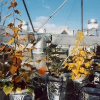 Large-scale experiments on trees and other perennial species
